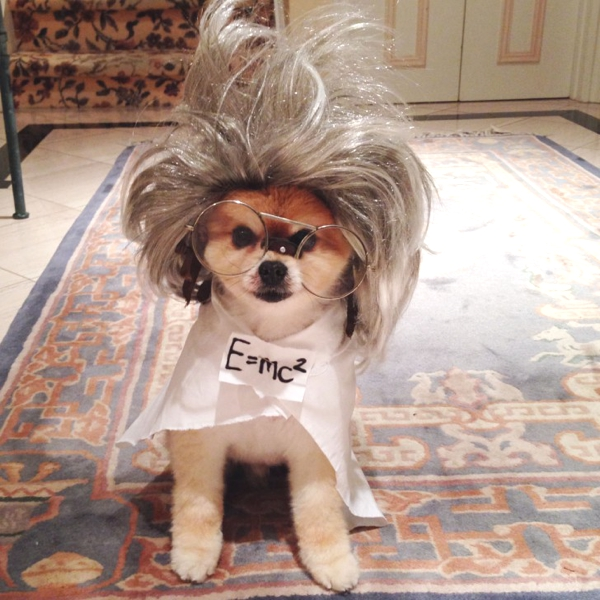 Cute Dog Costumes Ideas by Marni and Cubby01