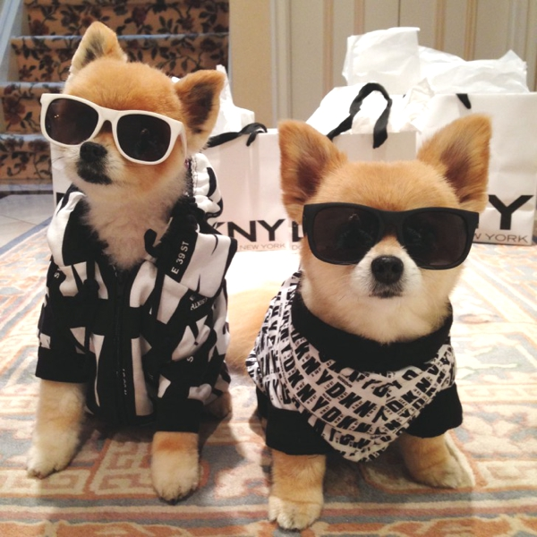 Cute Dog Costumes Ideas by Marni and Cubby03