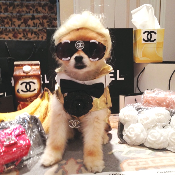 Cute Dog Costumes Ideas by Marni and Cubby