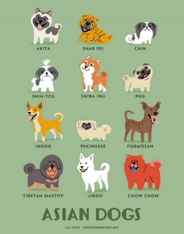 Dogs-of-the-World-cute-posters-3-640x813