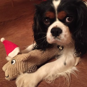 Dog Santa Claus Cavalier King Charles