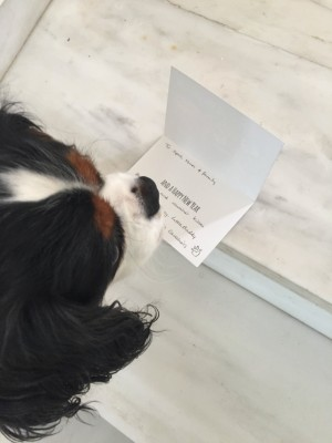 Dog reading card