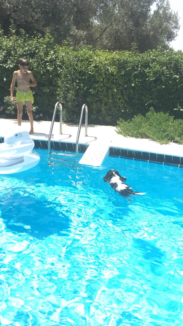 Spot Cavalier King Charles swimming pool